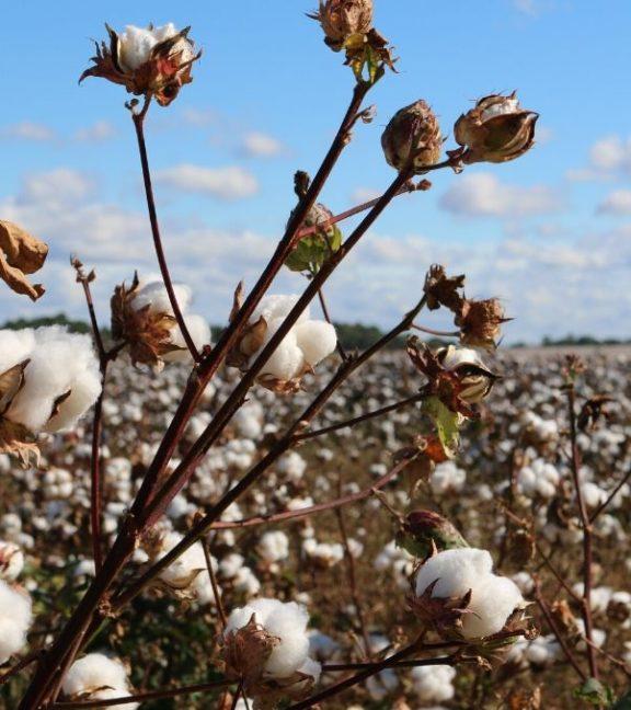 Bolsas algodón orgánico al por mayor