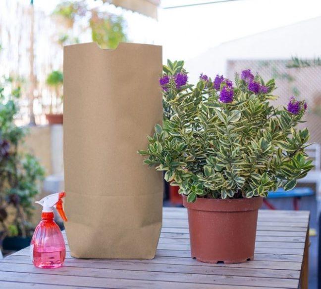 Bolsas de papel reciclado sin asas