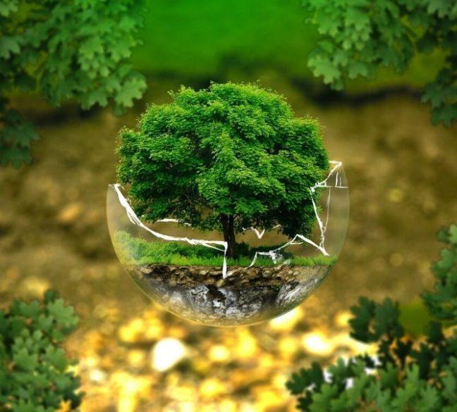 Desarollo sostenible