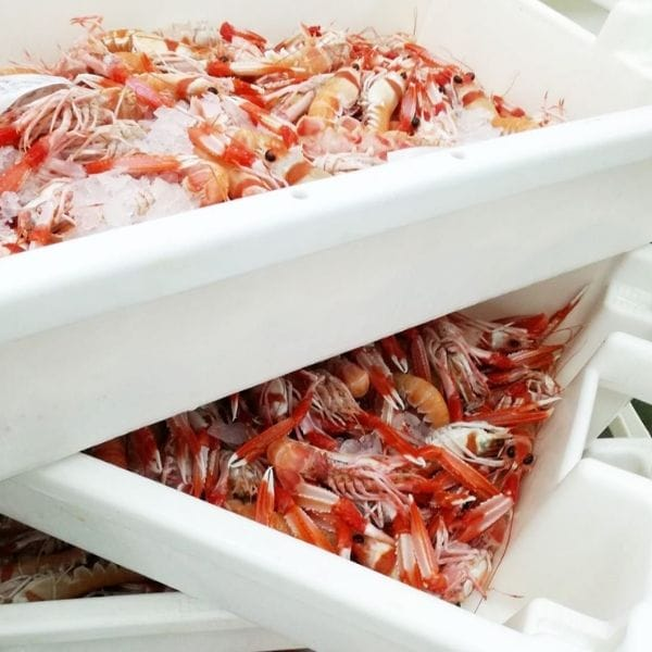Comprar pescado congelado online