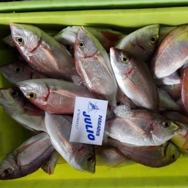 Tiendas de pescadería online